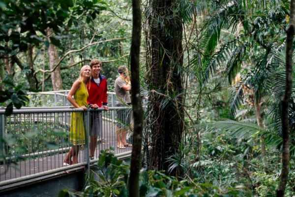 Rainforests to Explore in the Surrounding Cairns Area