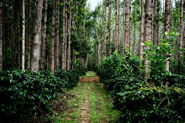 Chikmagalur Tourist Places