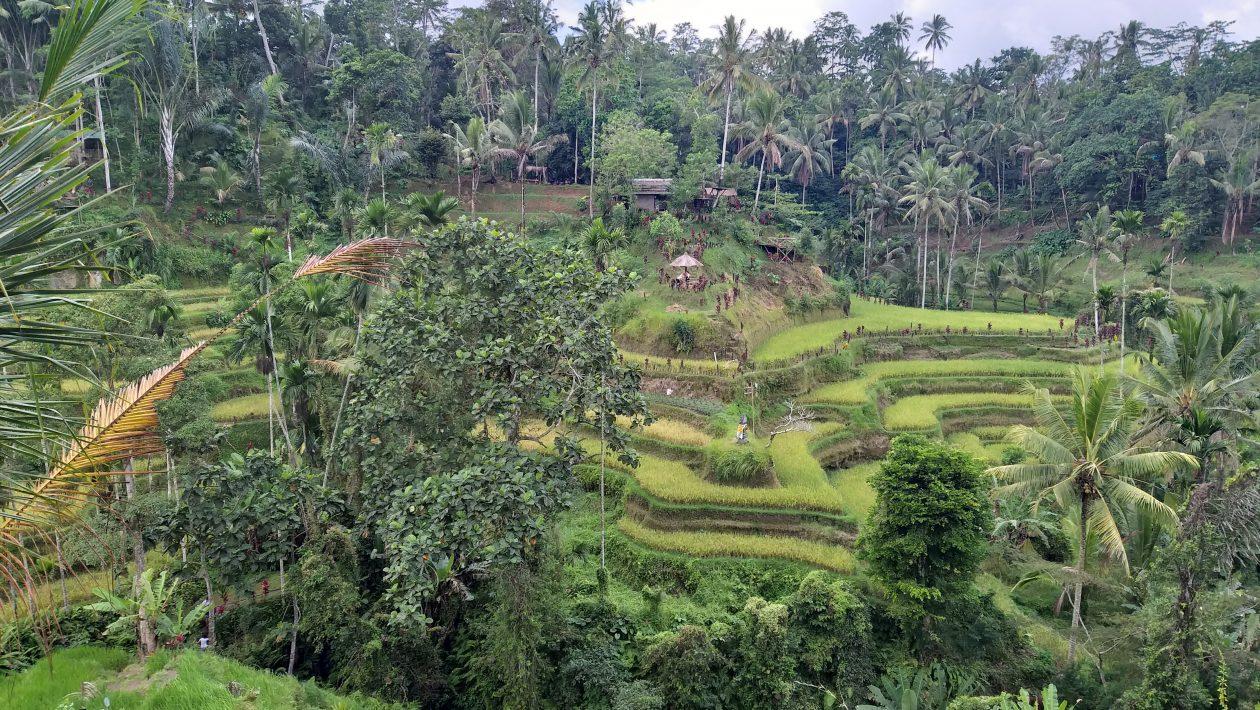 Where is Bali